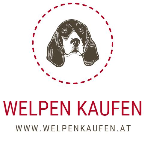 Welpen zu Verkaufen Österreich